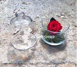 Bombonera Rosa Eterna Roja