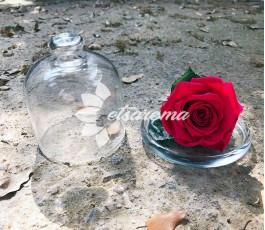 Bombonera Rosa Eterna
