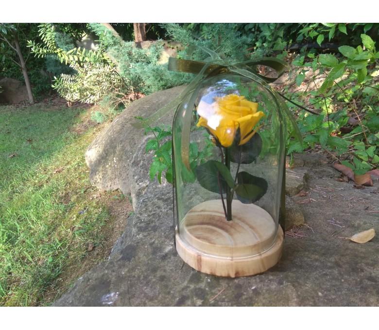 Rosa Eterna Amarilla: Colección Rosa La Bella y la Bestia