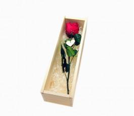 Rosa Roja Eterna en Caja...