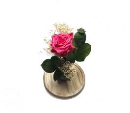 Campana Rosa Eterna