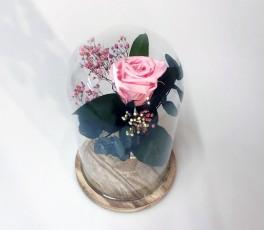 Campana Rosa Eterna: Rosa...