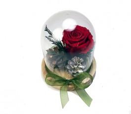 Campana Rosa Eterna Invierno
