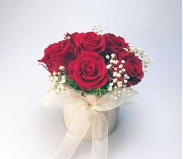 Colección Rosas Preservadas...