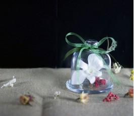 Bombonera Orquidea Preservada