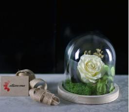 Campana Bella Rosa Eterna:...
