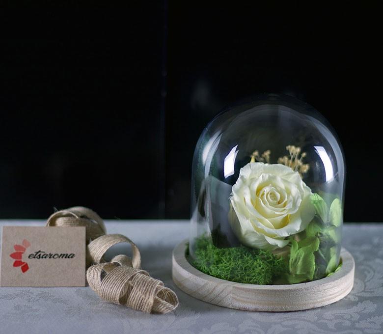 Campana Bella Rosa Eterna: Rosa Preservada