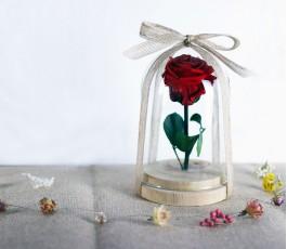 Campana Rosa Eterna Roja:...