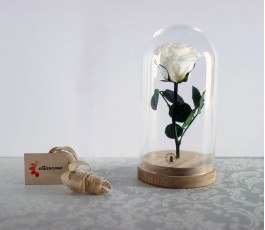 Cúpula Rosa Eterna:...