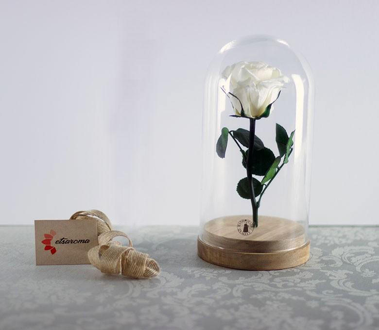 Cúpula Rosa Eterna: Colección Bella y Bestia