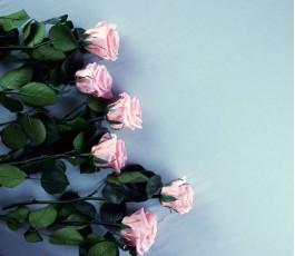 Rosa Preservada - Verdissimo