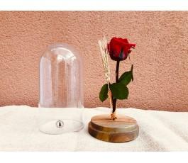 Campana Rosa Eterna:...